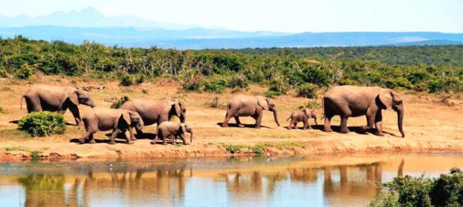 Destino: África Lusófona